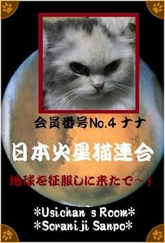 日本火星猫連合会員番号No.4 ナナ - コピー.jpg