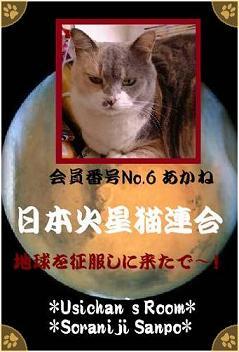 No.6 あかね - 70%.jpg