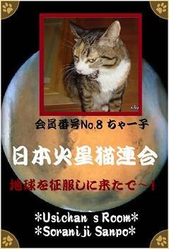 No.8 ちゃー子  - 70%.jpg