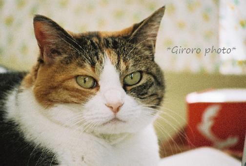 giroro photo 080916-3 - コピー.jpg