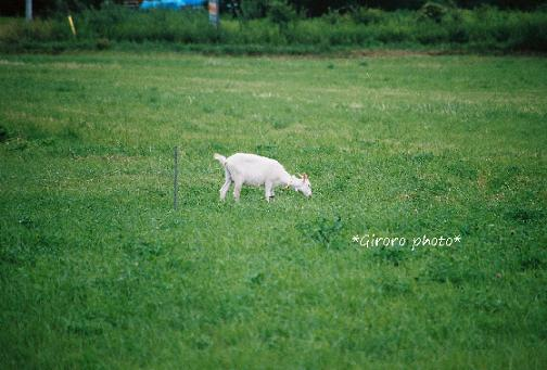giroro photo 080916-4 - コピー.jpg