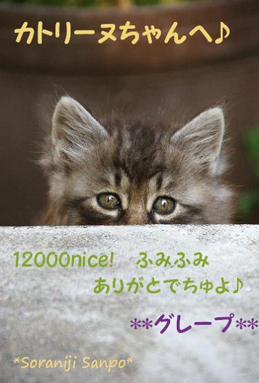 soraniji sanpo080725-1 - コピー.jpg