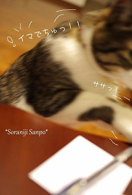 soraniji sanpo120603-4.jpg