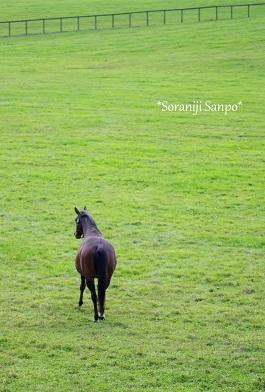soraniji sanpo140920-4.jpg