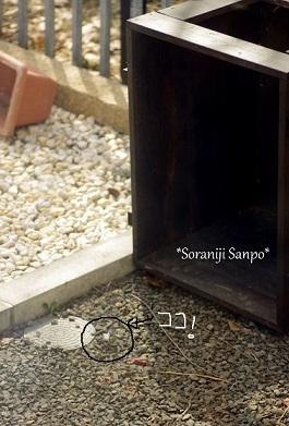 soraniji sanpo170409-1.jpg
