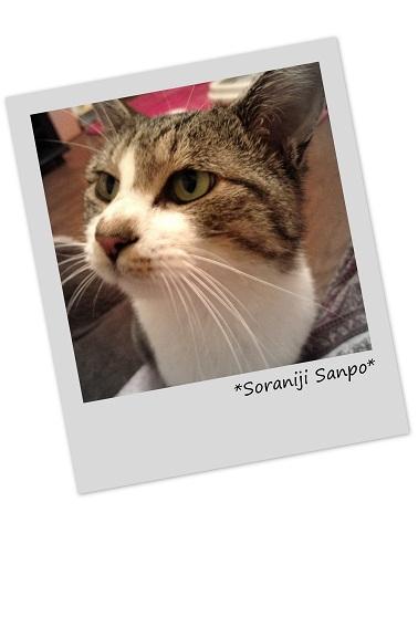 2012-09ポストカード.jpg