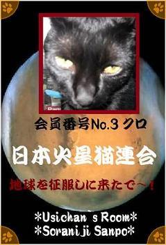 日本火星猫連合会員番号No.3 クロ - コピー.jpg