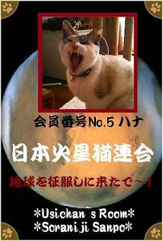 No.5 ハナ - 70%.jpg